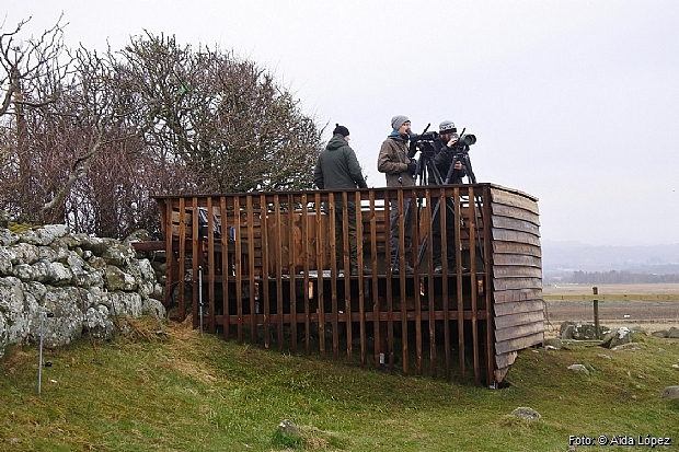 Birdwatchers counting from the new platform.